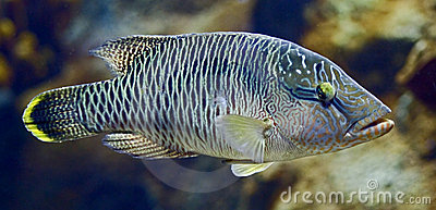 Tropical fish 33
