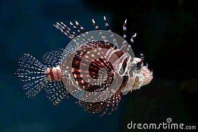 Tropical fish №7