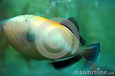Tropical Fish Stock Photo Image 56290493