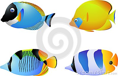 Tropical Fish Collection Royalty Free Stock Photos - Image: 28772478