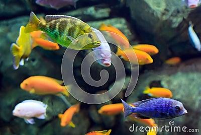 Pin como tatuarnos un anillo y pulsera tatuaje falso for Jb tropical fish