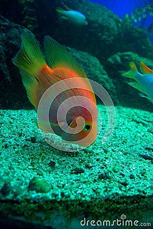 Tropical fish feeding