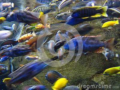 Tropical Fish On the Move
