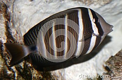 Tropical fish portrait