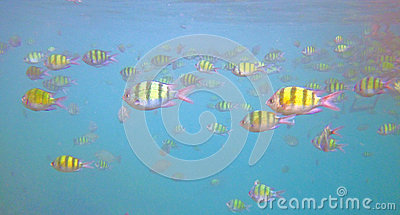 Tropical fish in sea