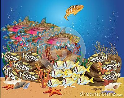 Tropical fish swim around the reef shoals