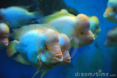 Tropical fish swimming in sea