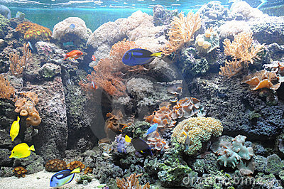 Tropical_fish_tank