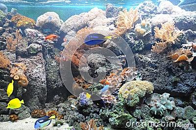 Tropical_fish_tank