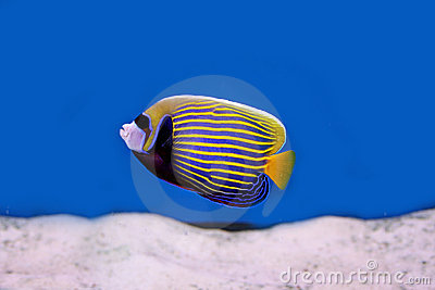 Tropical fish4