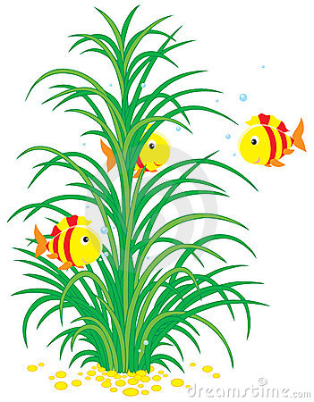 Tropical fishes and seaweed