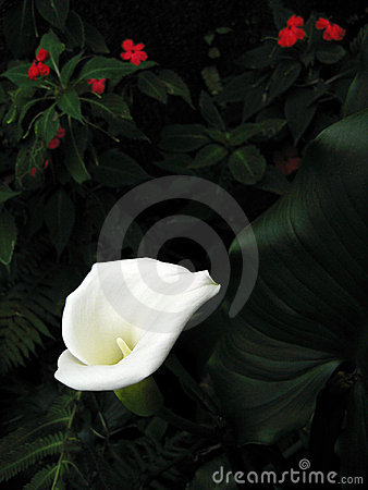 Tropical flora dark background