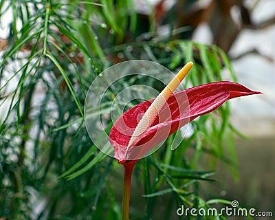 Tropical Flower at renowned Fredrick Meijer Garden