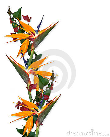 Tropical Flowers Border Bird of paradise