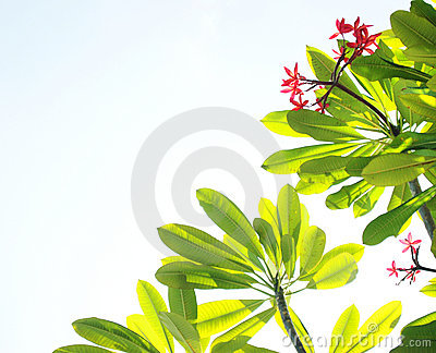 Tropical flowers and sky background