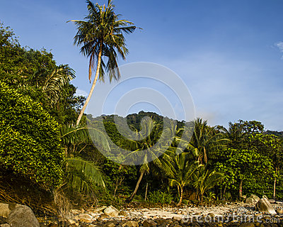 Tropical forest on the island