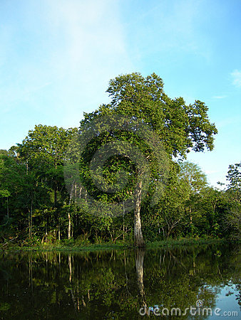 Free Tropical Forest On The Amazon River Royalty Free Stock Photo - 1101035