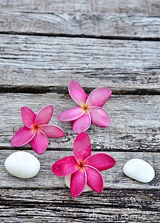 Tropical frangipani on weathered wood