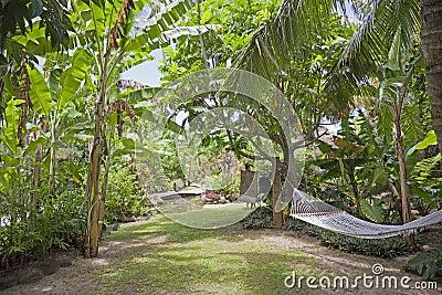 Tropical Garden with Hammock