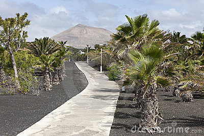 tropical garden in Lanzarote