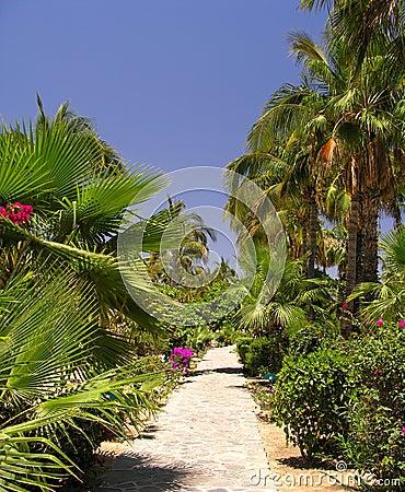 Tropical Garden No.2