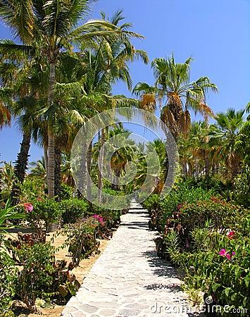 Tropical Garden No.3