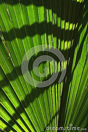 Tropical green ferns
