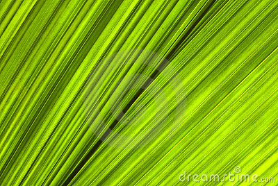 Tropical green leaf - abstract background