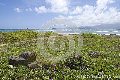 Tropical Hawaii Beach with pohuehue flowers