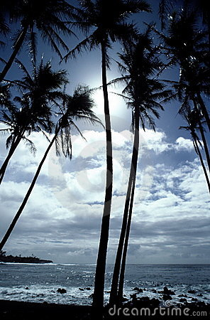 Tropical Hawaiian Shoreline