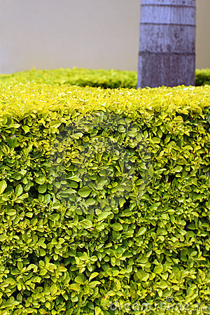 Tropical hedge