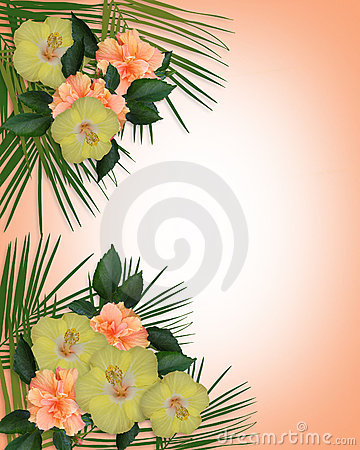 Free Tropical Hibiscus Flowers Border Royalty Free Stock Photo - 10197565
