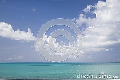 Tropical Horizon