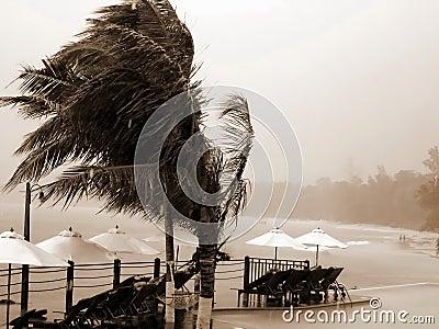 Tropical hurricane, resort, palms.