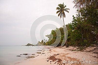 Tropical idyllic paradise beach