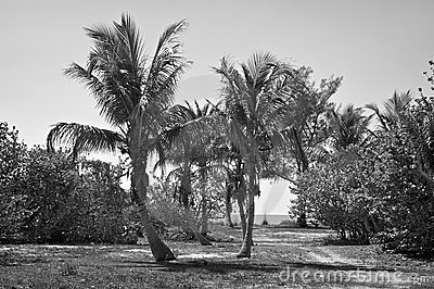 Tropical island in black and white