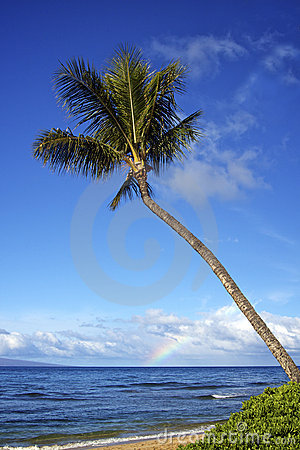 Tropical Island Palm