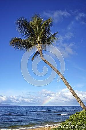 Tropical Island Palm
