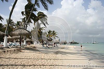 Tropical Island Palms