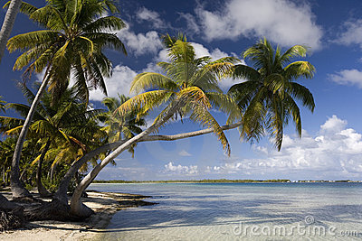 Tropical Island Paradise - Cook Islands