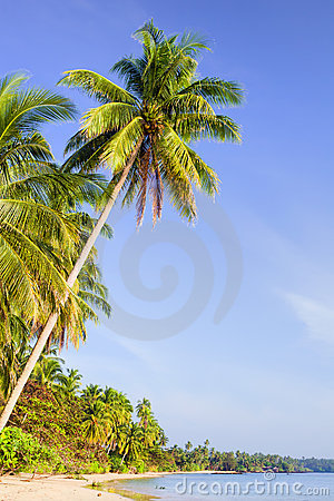 Tropical Island Scenery