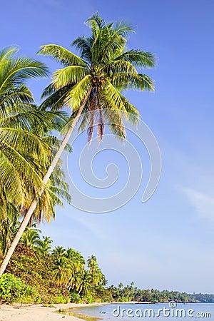 Tropical Island Scenery