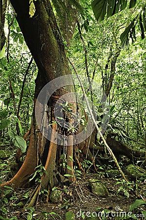 Tropical jungle detail amazon rain forest tree