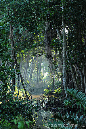 Tropical jungle forest clearing