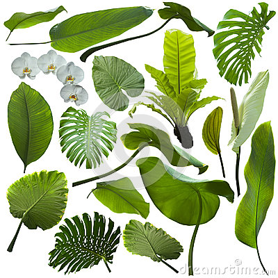 Free Tropical Jungle Leaves Stock Photography - 98960302