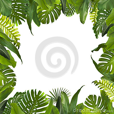 Free Tropical Jungle Leaves Background Royalty Free Stock Photo - 90375705