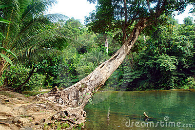 Tropical jungle with pond.