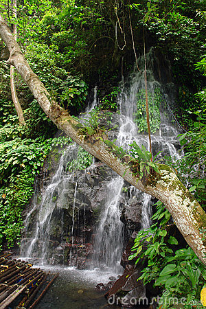 Tropical jungle with tree, raft and waterfall