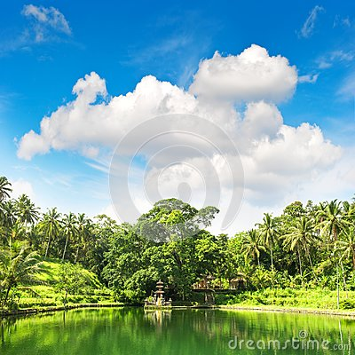 Free Tropical Lake Palm Trees Blue Sky Nature Landscape Stock Photos - 121423443