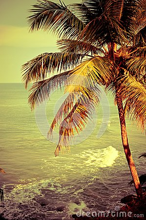 Tropical landscape with ocean beach and palm tree
